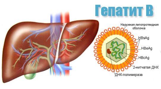 Бытовое заражение гепатитом б
