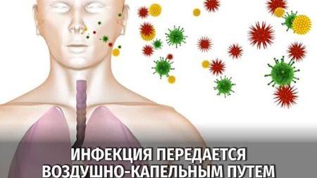 Chlamydia pneumoniae что это такое
