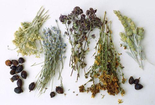 лечение бесплодия травяными сборами