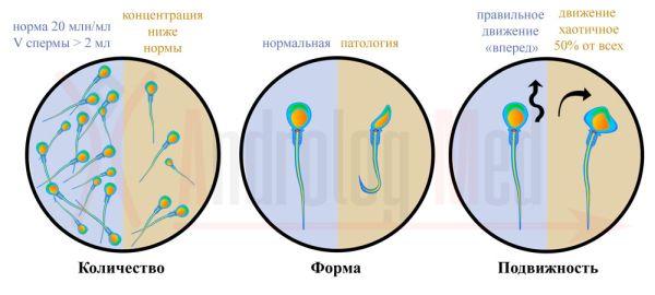 Какая еда повышает сперматозоиды звучит