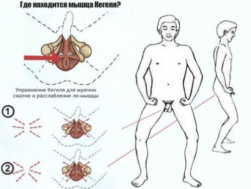 мышца Кегеля