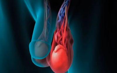 воспаление яичка
