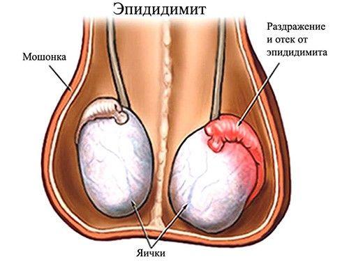 bolyat-yaytsa-posle-orgazma